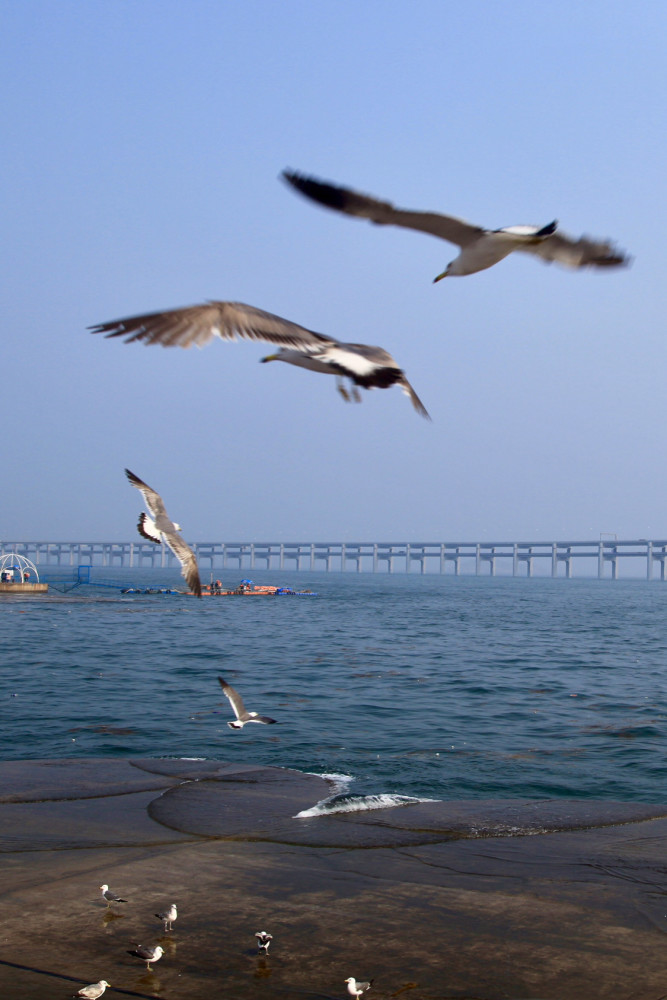 大连滨海路怎么自驾游玩,一天时间,那些地方值得停留