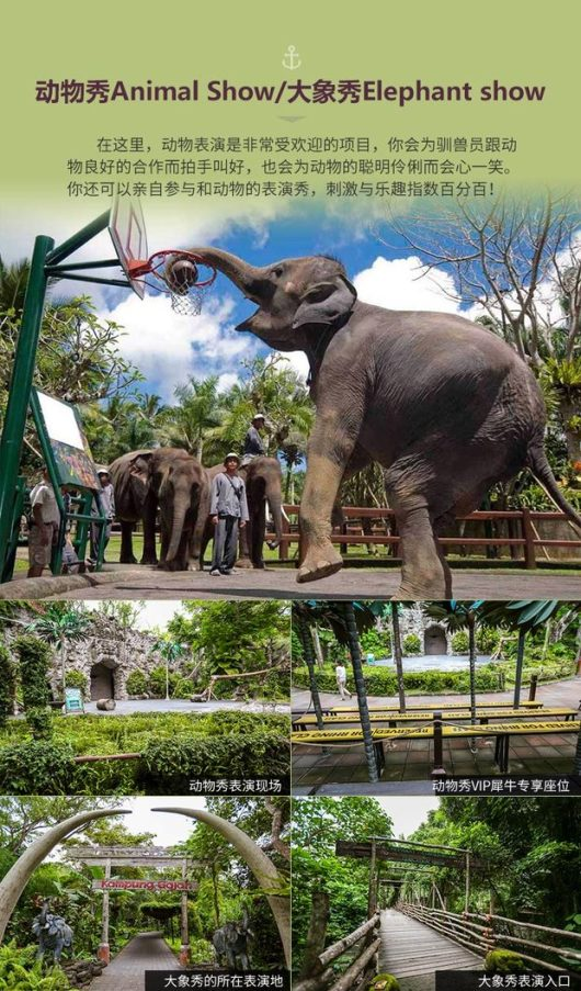 野生动物园一日游bali safari and marine park(亲子首选 多种套票可