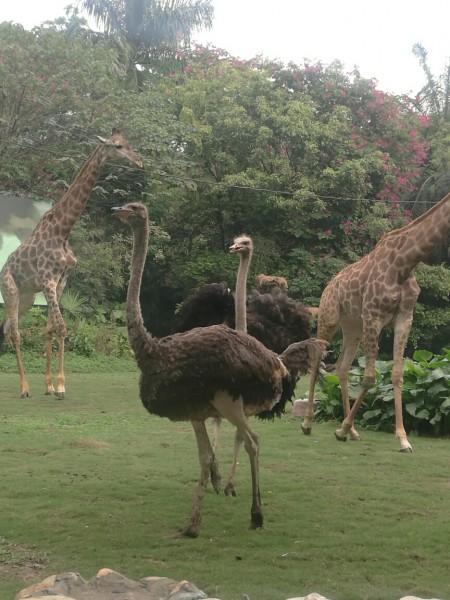 长隆野生动物园里有四场演出