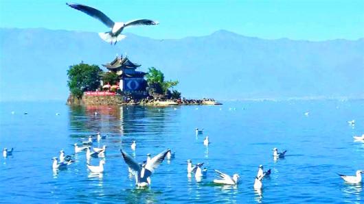 小普陀岛虽然小,但名气很大,在介绍大理的画册中少不了有它.