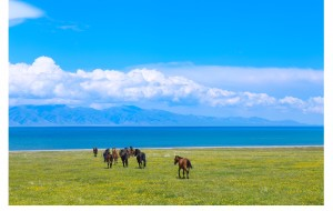 【伊犁图片】2016.6┇最美的草原与花海,在伊犁——新疆九天租车自驾行