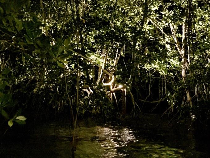壁纸 风景 森林 桌面 680_510