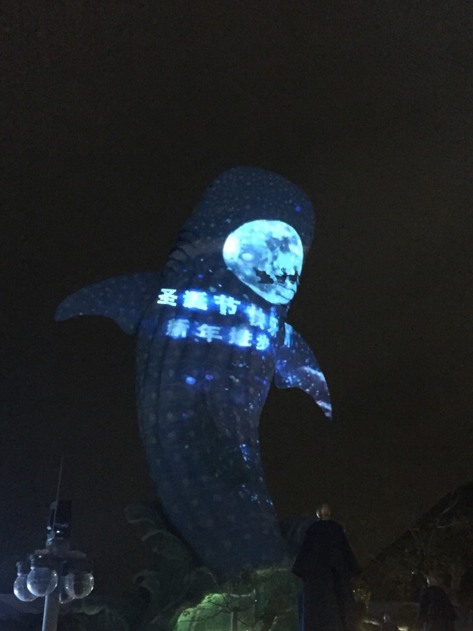 珠海长隆海洋王国:和白鲸亲密接触的幸运星(深圳出发)