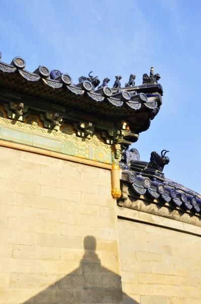 天坛公园的古柏古松在   北京   那是头一号.   九龙   柏:此树是一株