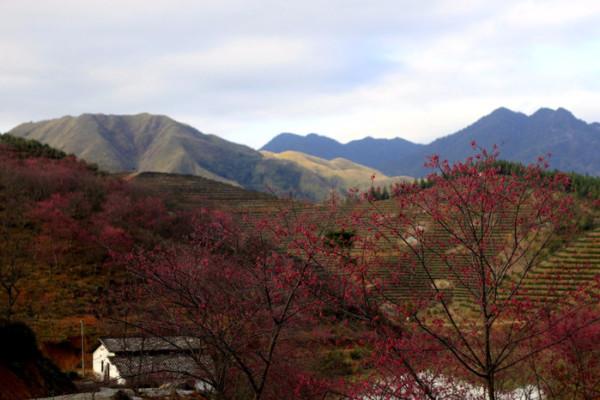 汪峪街道风景
