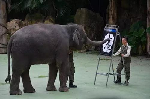 爸爸去哪儿取景地,广州长隆野生动物园成人票 电子票