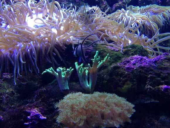 澳大利亚 (悉尼水族馆,野生动物园,杜莎夫人蜡像馆,悉尼塔,曼利水族馆