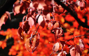 【本溪图片】爱在深秋
