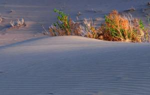 【库布齐沙漠图片】黄绿二重奏——库布齐沙漠掠影