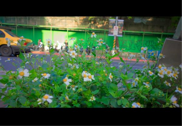 平面图 水草 水生植物