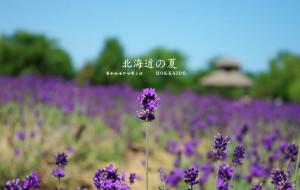 【日本图片】爱如夏花——北海道婚纱拍摄之旅