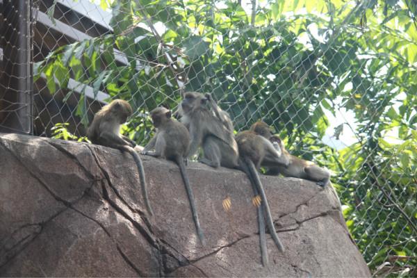 新加坡 river safari河川动物园游记