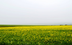 【哈密图片】新疆 哈密市郊  巴里坤草原 假期的第一站