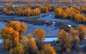 【库尔勒图片】镜面胡杨:老草湖乡的灿烂金色