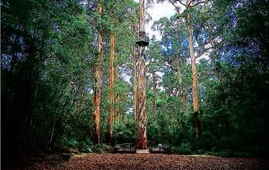 【西澳大利亚州图片】碧水,蓝天,古树——西澳大利亚南部及罗特内斯特岛(Rottnest Island)三日游(118P)