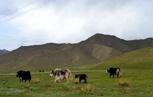 海北藏族自治州图片