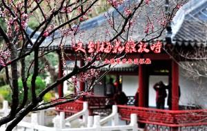 【上海图片】又到梅花绽放时—上海莘庄公园探梅