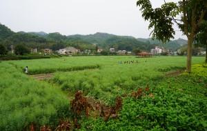 【花都图片】周末 天河公园 花都红山村 高百丈