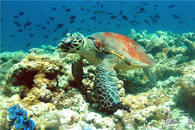 壁纸 海底 海底世界 海洋馆 水族馆 680_453