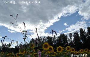 【延庆图片】2015.8,北京向北之延庆东线,花如海,景如画(200张美图,无ps)