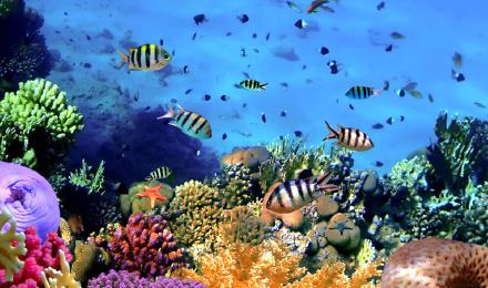 【免费拍照刻盘赠送】长滩岛海底漫步探究海底奥秘