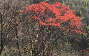 【张家口图片】黑龙山森林公园