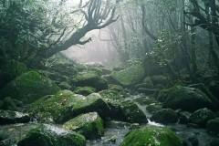带你寻找幽灵公主的秘密森林——日本屋久岛(小众旅游)