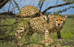 【坦桑尼亚图片】此生不可再遇见,记忆中的动物大世界,坦桑尼亚塞伦盖蒂+桑岛。