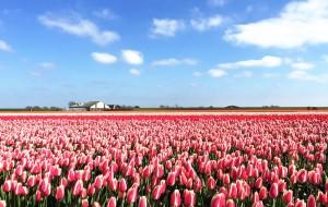 【鹿特丹图片】绝美荷兰羊角村、北部花田自驾-比利时-法国城堡小镇(荷兰篇)