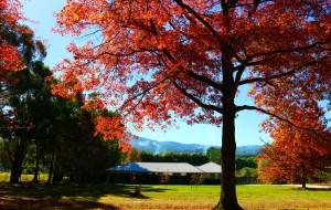 【澳大利亚图片】【墨尔本记忆】  多彩的秋天