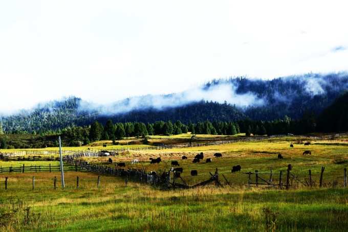 到达琼杰果寺检查站,海拔已经4000多米了,山的颜色变成冷色调了,岩石