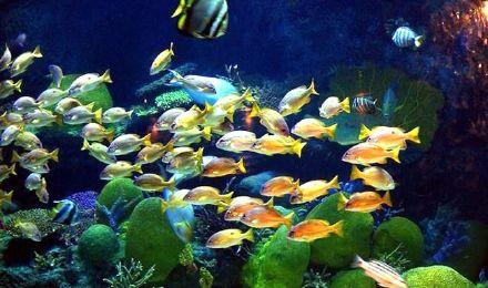【曼谷亲子游】暹罗海底世界门票多套餐可选