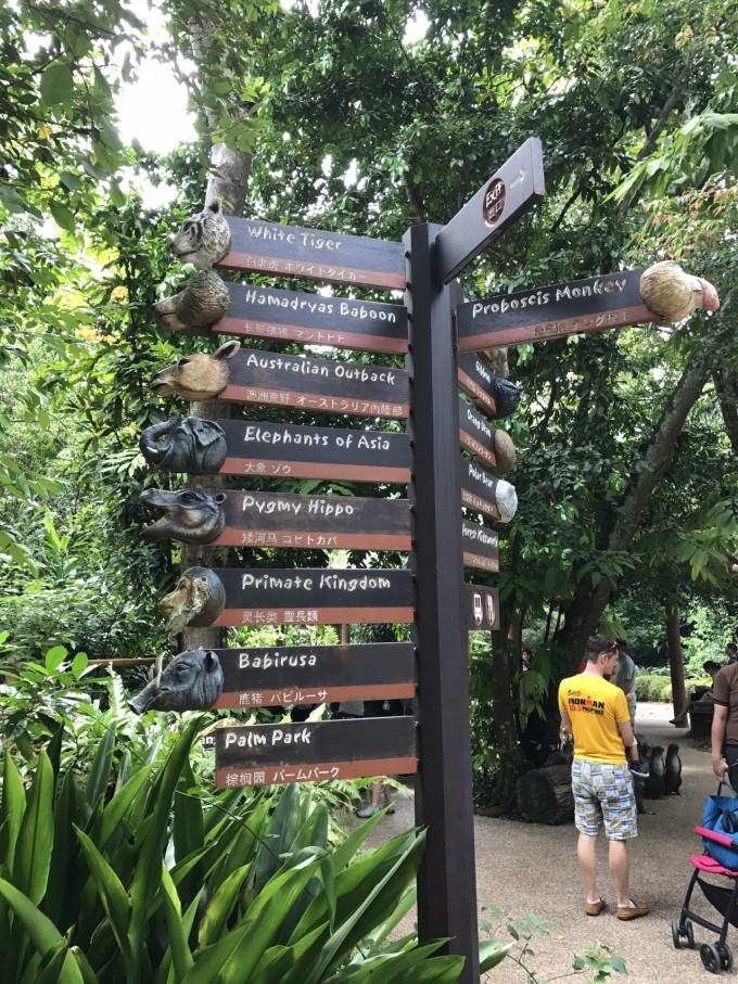 开放式的园区,有许多天然的屏障将动物分割开,园子就像一个热带雨林的