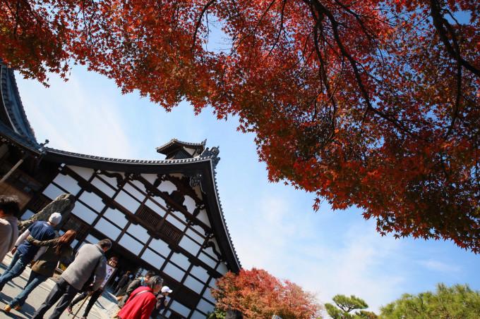 浪迹日本,秋天童话--东京,富士山,京都,奈良,大阪七日行