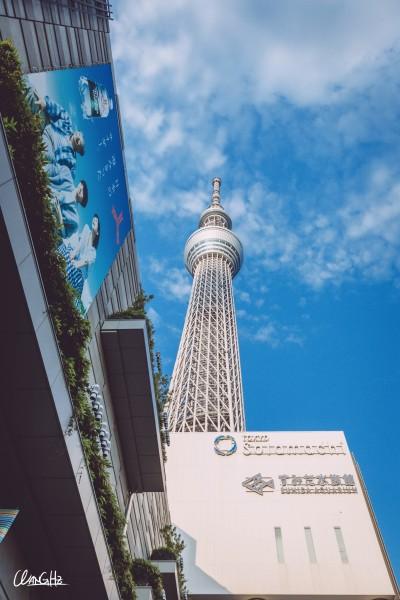 就是世界第二高建筑晴空塔了