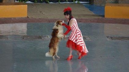 杭州杭州野生动物世界门票