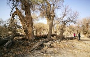 【轮台图片】印记中的胡杨与沙漠公路