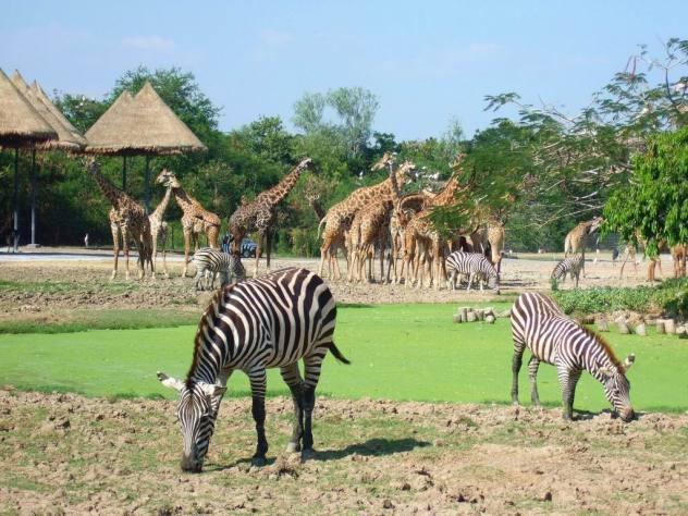 [题主采纳]你好,我前几天才去过考艾国家公园, 野生动物园也去过,都给你说说,你自己参考。(配图是网上找的,主要是为了给你讲解用的) 觉得有帮助的话记得采纳哦!  Safari World Bangkok 曼谷野生动物园 全亚洲最大野生动物园 具体是不是最大,我也不确定,网上是这样说的。占地300英亩。野生动物园分为两部分:动物世界中有亚、非两洲的哺乳动物,如狮子、老虎、长颈鹿、斑马和熊等,四周环境与自然丛林相仿;另一部分则为海洋世界,园中还有滑水表演、海豚表演、猩猩表演、西部牛仔枪战秀等等。此外,这里还