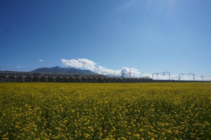 壁纸 草原 成片种植 风景 植物 种植基地 桌面 680_452