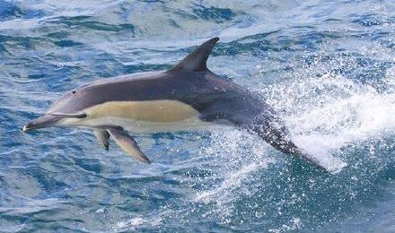 悉尼周边 杰维斯湾观海豚游船(jervis bay)