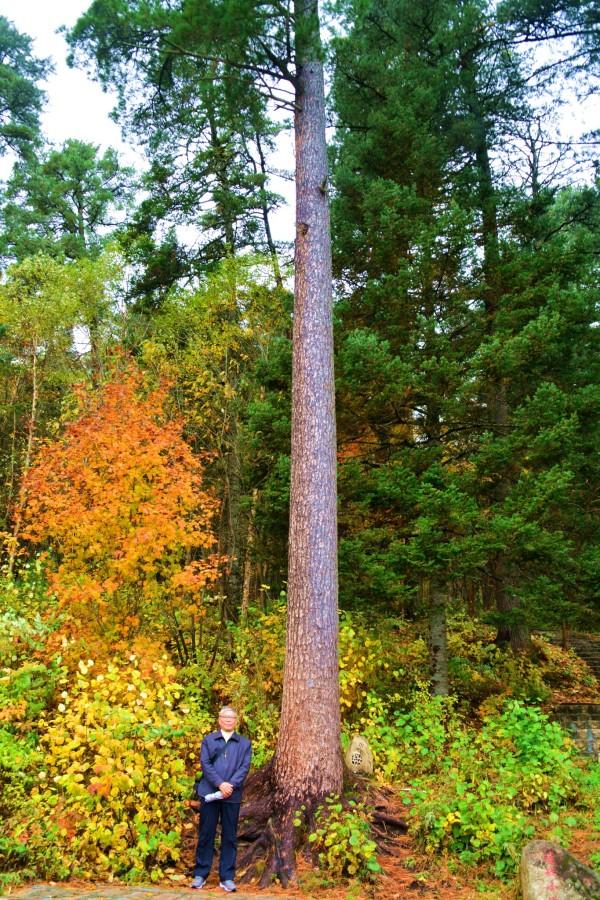 去东北,五营国家森林公园旅游.