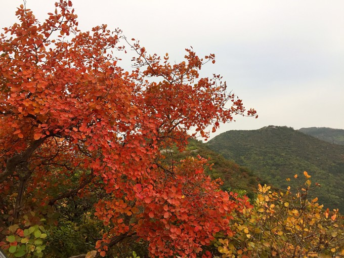 秋天,香山的早晨
