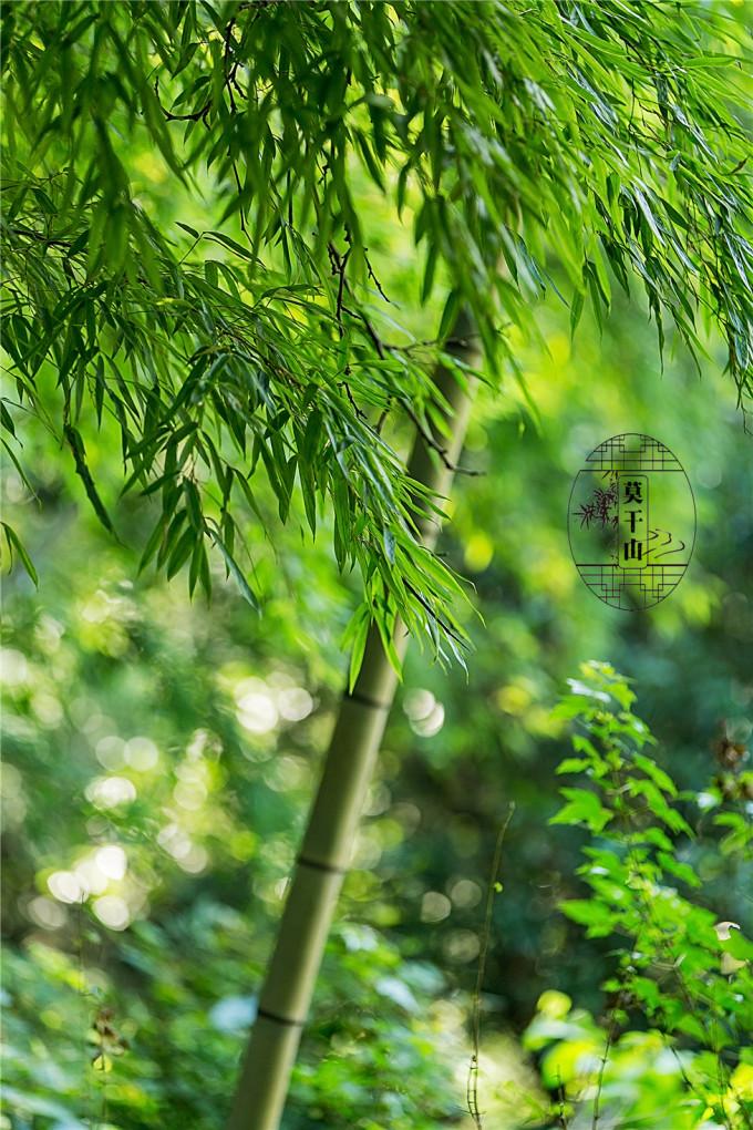 曲径通幽,一路翠竹.漫山竹林,撑起偌大一片绿荫.
