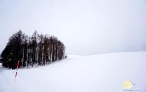【美瑛町图片】你期待的冬天什么样?一只蜗牛对北海道的记忆