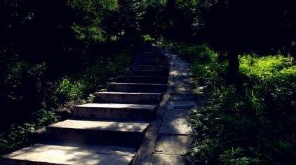 北京蟒山国家森林公园门票