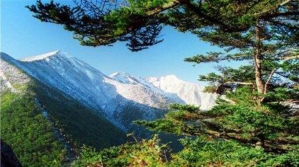 由下到上,可以看到松栎林带,红桦林带,冷杉林带,落叶松林带,高山草甸图片