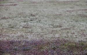 【若羌图片】青海湖-张掖-敦煌-嘉峪关,我们的大西北环游