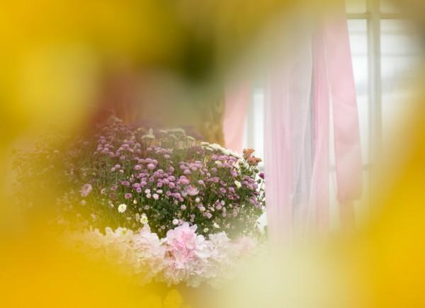 最美的彩虹菊田图片