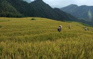 【连州图片】欧家梯田+千年瑶寨:极其悠闲的两天旅行(2016年9月)
