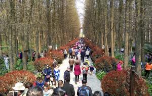 【兴化图片】周末游江苏兴化李中水上森林景区 、千垛风景区